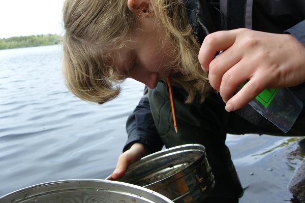 Изучение пресноводных моллюсков. О.В. Усачева. 2010 год.