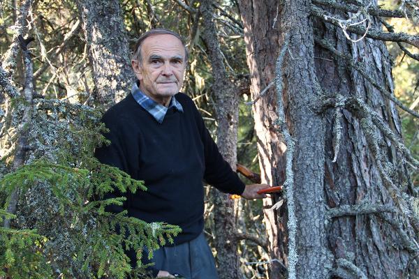 Отбор образцов древесины для дендроиндикационного исследования. Н.В. Ловелиус. 2012 год.