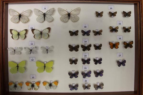 Коллекция насекомых. 2013 год.